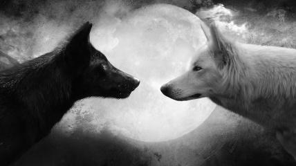 good evil wolves