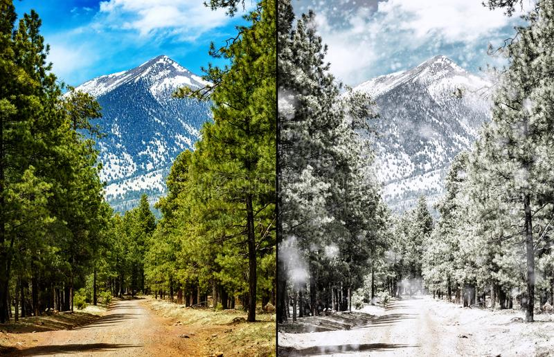 flagstaff-arizona-forest-summer-to-winter-scene-comparison-photo-same-scene-flagstaff-arizona-summer-105820279