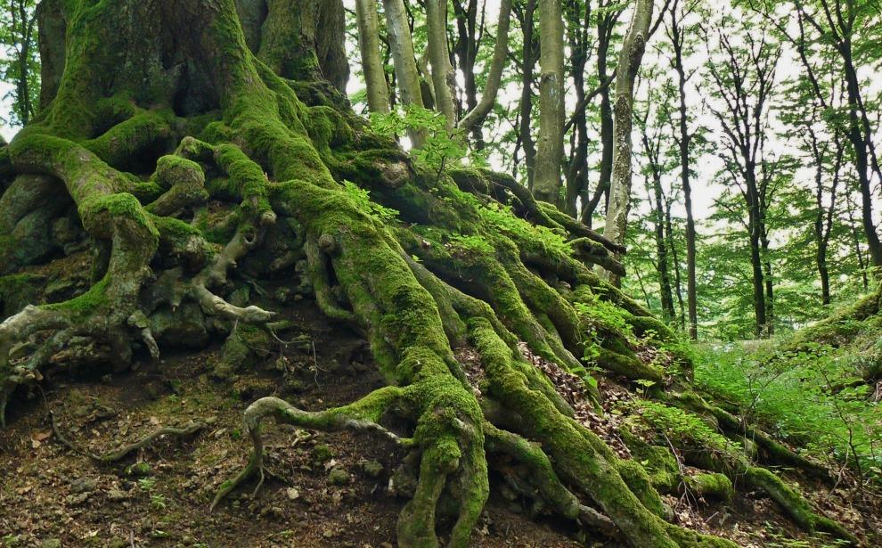 root-tree-root-tree-nature-log-276636.jpg