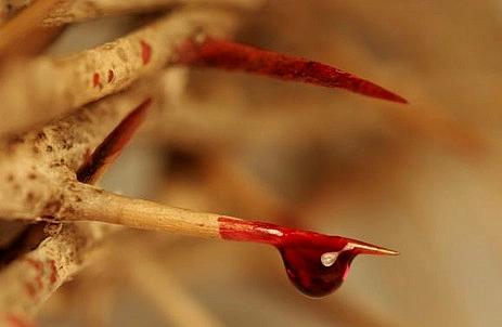 web-thorns-blood-christ-aleteia-media-library